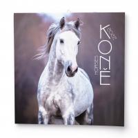 Nástěnný obrázkový kalendář - Koně, 285x285 mm, měsíční