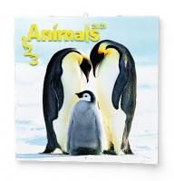Nástěnný obrázkový kalendář - Animals, 285x285 mm, měsíční